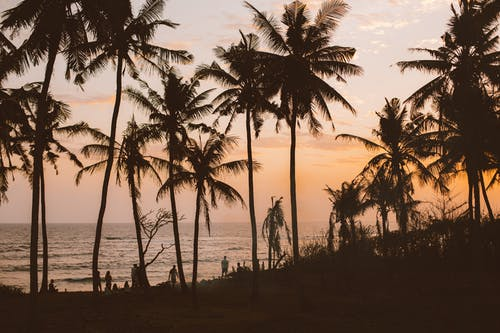 Silhouettes of people and palms resting on evening beach