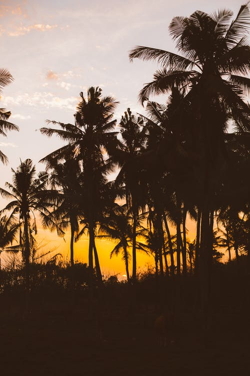 Picturesque view of tropical palm in sunset light