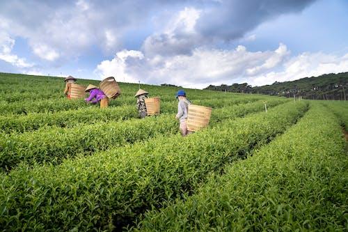 Δωρεάν στοκ φωτογραφιών με αγρόκτημα, αγροτικός, ανάπτυξη, Άνθρωποι
