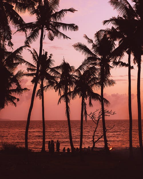 Silhouettes of people enjoying evening on exotic beach surrounded by palms and campfire near calm sea against majestic bright purple sky during sunset