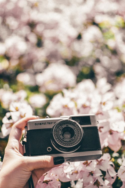 Woman holding vintage photo camera against blooming flower