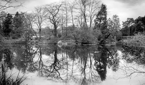 Imagine de stoc gratuită din alb-negru, apă, arbori, cer