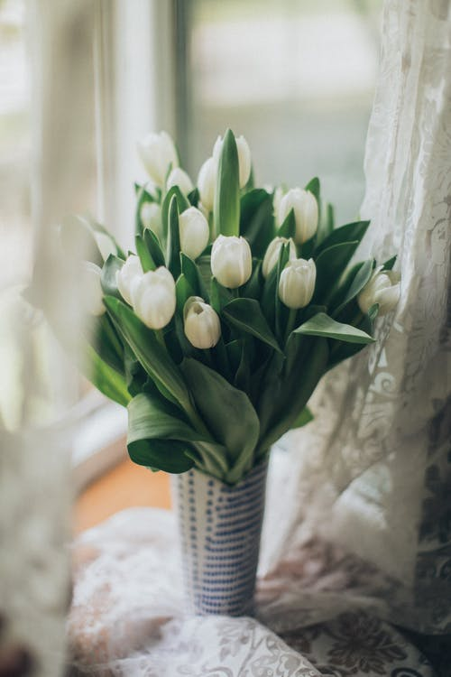 Vase with white tulips on windowsill