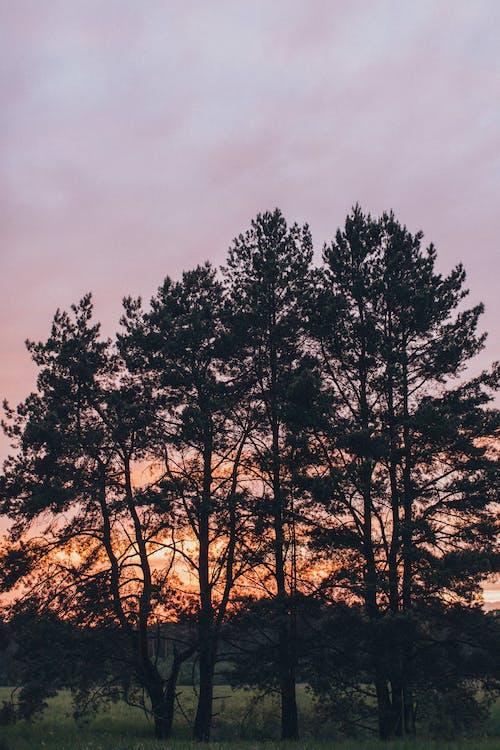 Fotos de stock gratuitas de ángulo bajo, anochecer, árbol