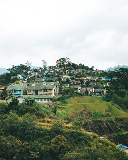 Δωρεάν στοκ φωτογραφιών με άγριος, αγροτικός, γαλήνιος, γραφικός