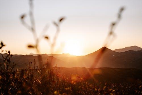 Δωρεάν στοκ φωτογραφιών με copy space, αγριολούλουδο, άγριος, αγροτικός