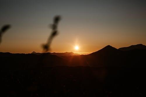 Δωρεάν στοκ φωτογραφιών με αγριολούλουδο, άγριος, ακτίνα, ακτίνα ήλιου