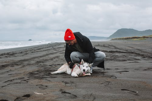 Male in warm hat and coat wearing sunglasses playing with cute Husky on wet sandy beach on overcast day
