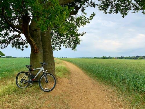 Foto profissional grátis de área, árvore, bicicleta, bike