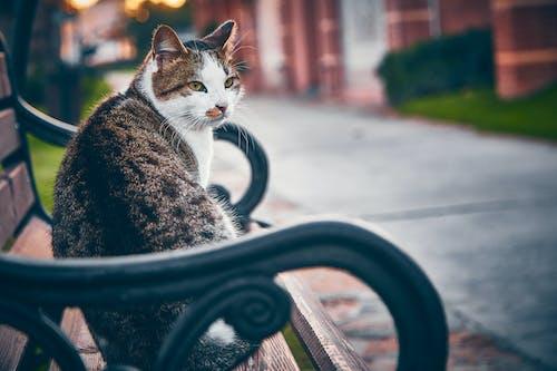 Attentive cat resting on bench on city street