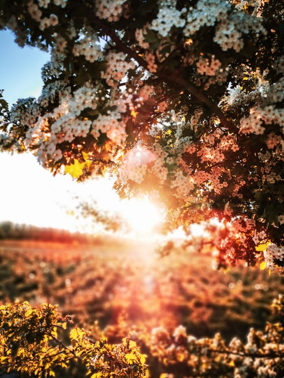 Blooming tree in field illuminated by bright sunlight in summer