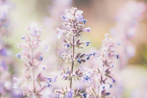 Blue and White Flower in Tilt Shift Lens