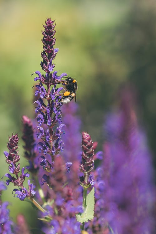 Black and Yellow Butterfly Perched on Purple Flower in Close Up Photography