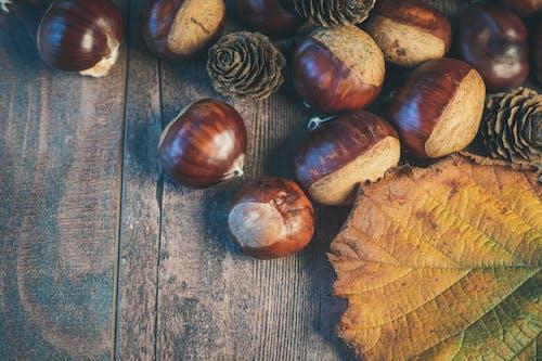 Fotos de stock gratuitas de árbol de avellana, caer, caída, cáscara