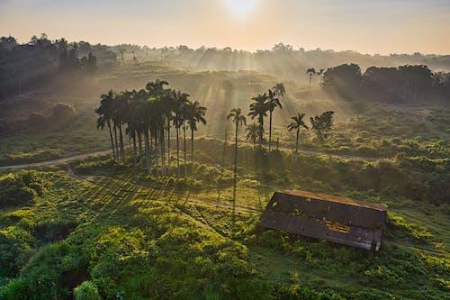 Photos gratuites de drone, flore, indonésie, panneaux d'affichage