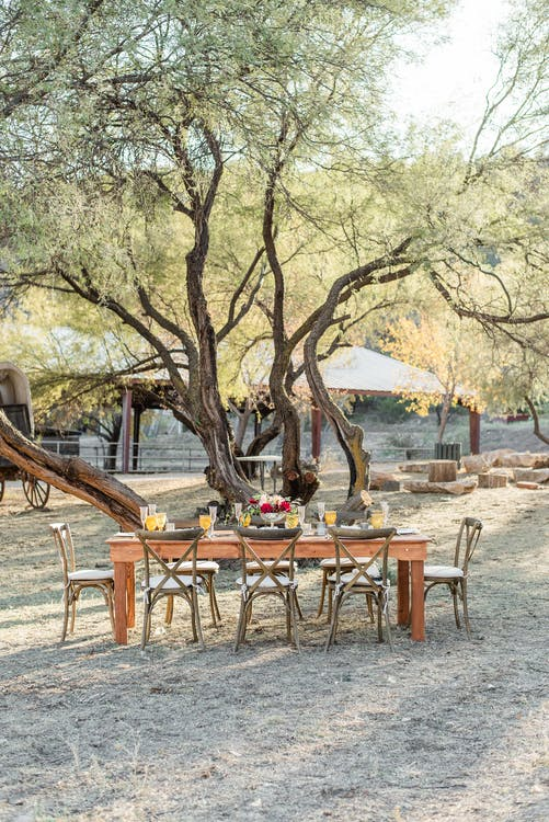 Wooden table with elegant vintage chairs ready for banquet under big trees in spacious yard on sunny day in countryside