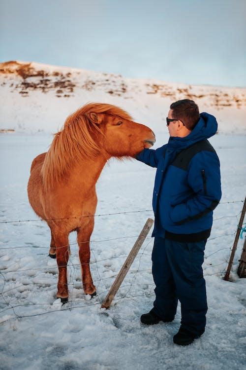 Man stroking horse in winter paddock