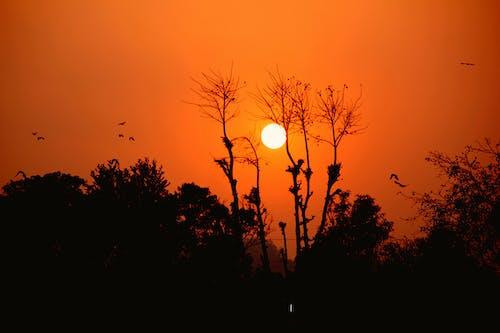 Free stock photo of nature, sun, sunset, trees