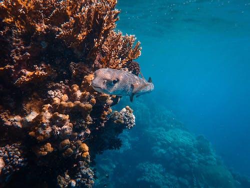 Immagine gratuita di acqua, acqua salata, barriera corallina, corallo
