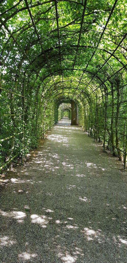 Ảnh lưu trữ miễn phí về đường hầm, đường hầm xanh, hầm vườn, tầm nhìn đường hầm