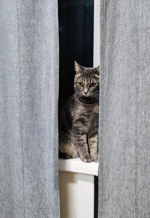 Gray tabby cat sitting on window sill near gray curtains under light at night time