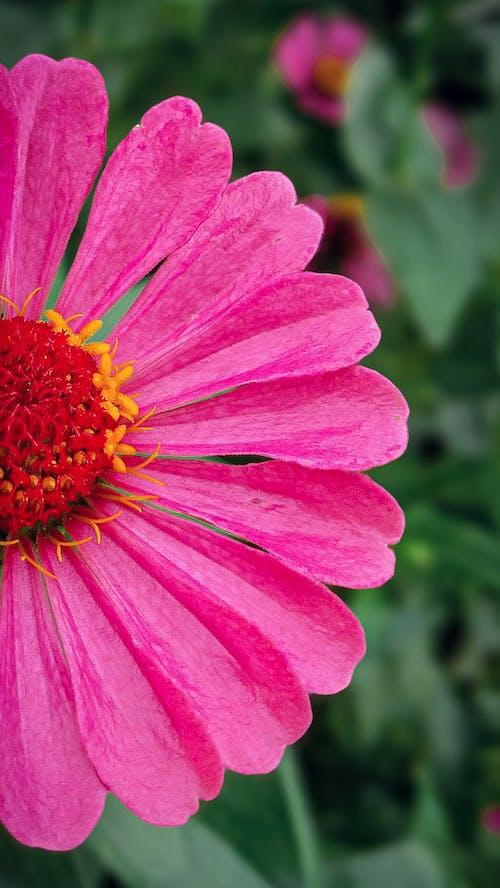 Gratis stockfoto met bloem, charmant, elegant, mooi