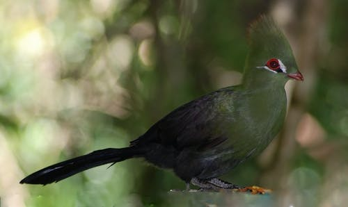Gratis stockfoto met safari, vogel, wilde vogel, wildkijken