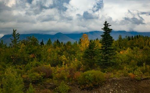 Gratis stockfoto met avontuur, natuur, panorama, ruig