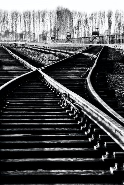Gratis stockfoto met birkenhau, concentratie kampen, holocast, paden