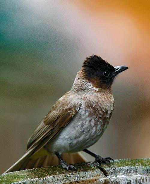 Gratis stockfoto met aviaire, beest, birdwatching, buiten