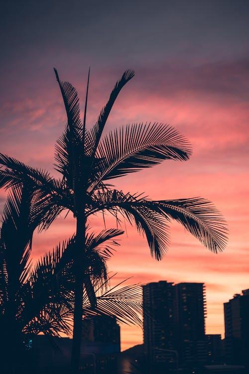 Free stock photo of city, los angeles, palm tree