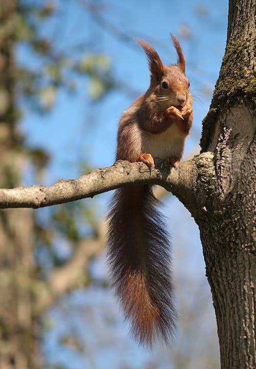 eichhörnchen, 公園, 動物 的 免費圖庫相片