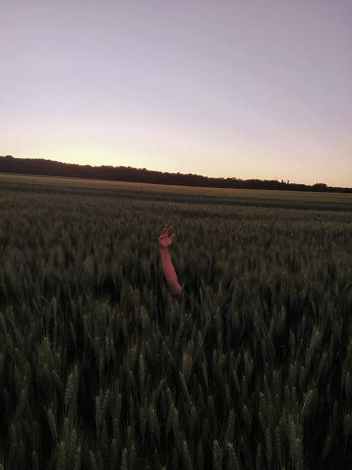 Unrecognizable person reaching out hand from green lush field against sunset sky in countryside