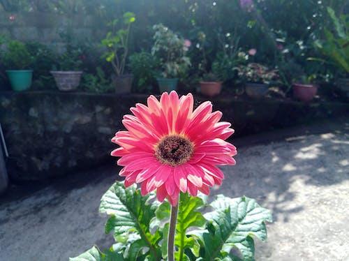Immagine gratuita di all'aperto, bel fiore, casa, estate