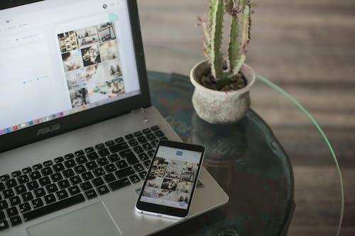 Photos gratuites de appli, application, cactus