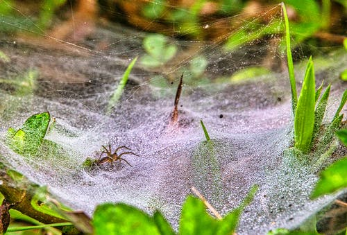 Photos gratuites de arachnide, araignée, arbre, automne