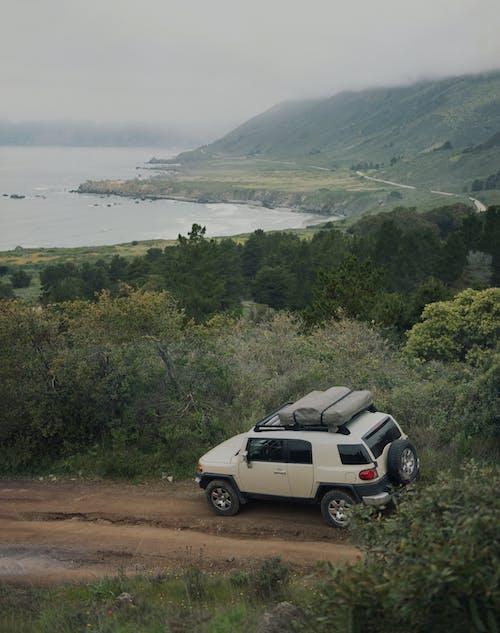 Foto d'estoc gratuïta de a l'aire lliure, aparcat, arbre, aventura