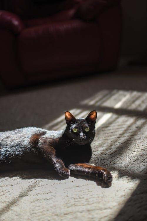 Cute black cat relaxing on carpet