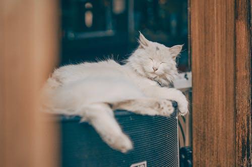 White Cat Lying on Blue Textile