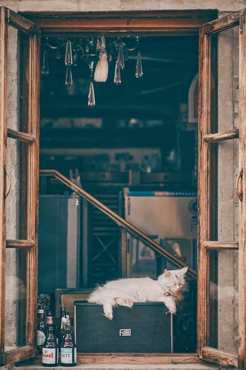 Photos gratuites de à l'intérieur, abandonné, architecture