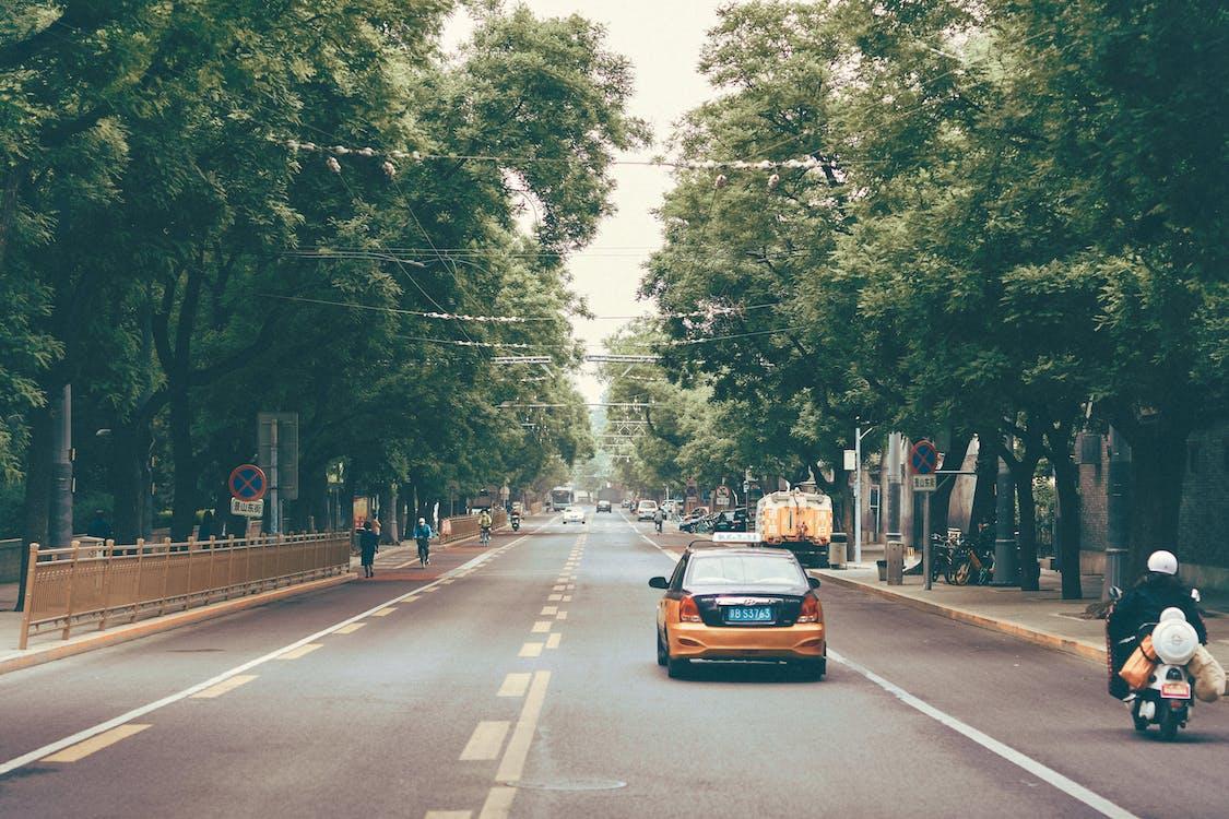 Blue Car on Road Between Trees