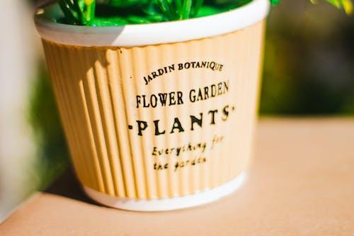 Close Up of a Flower Pot