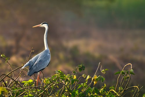 Attentive graceful predatory bird with long white neck and gray plumage strolling near plants in zoological garden