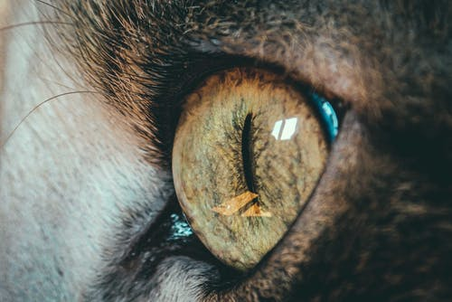 Closeup of bright green eye of feline pet with thin pupil reflecting window at home
