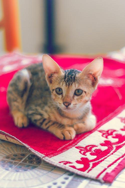 Free stock photo of animal, cute, kitten, kittens