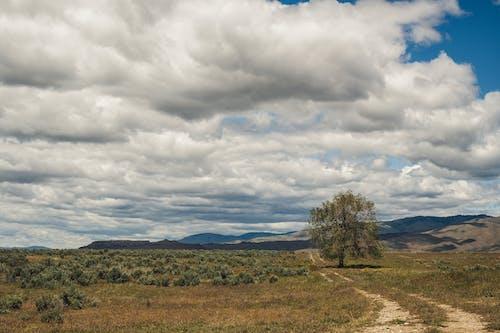 夏天, 夏季, 山, 山丘 的 免費圖庫相片