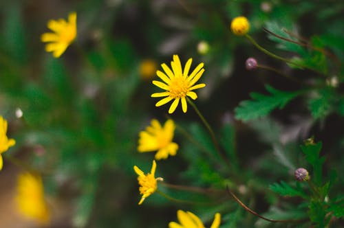 Blooming Yellow Flowers