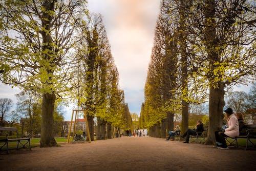 全景, 公園, 分支機構, 和平的 的 免费素材图片