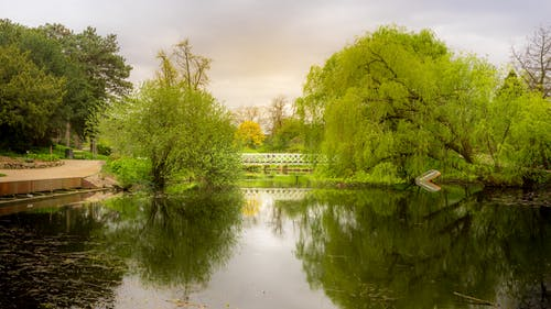Imagine de stoc gratuită din apă, ape calme, arbori, auriu