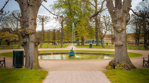 Imagine de stoc gratuită din arbori, auriu, cer, cer albastru